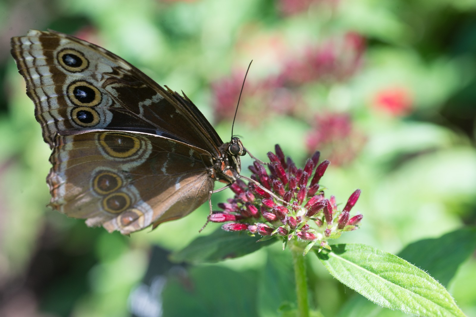 06-17-16 Chicago Botanic Garden-197.jpg
