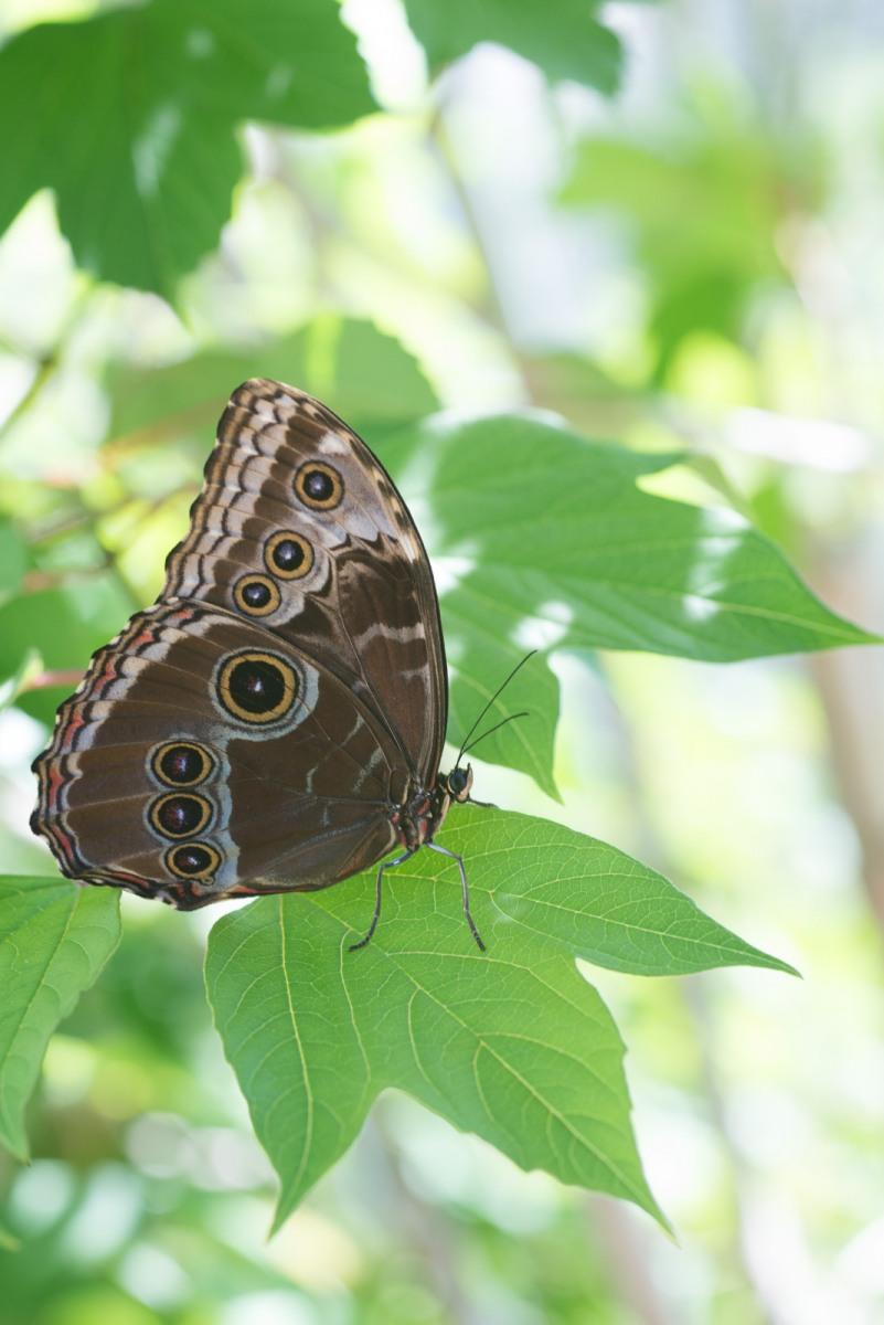 06-17-16 Chicago Botanic Garden-208.jpg
