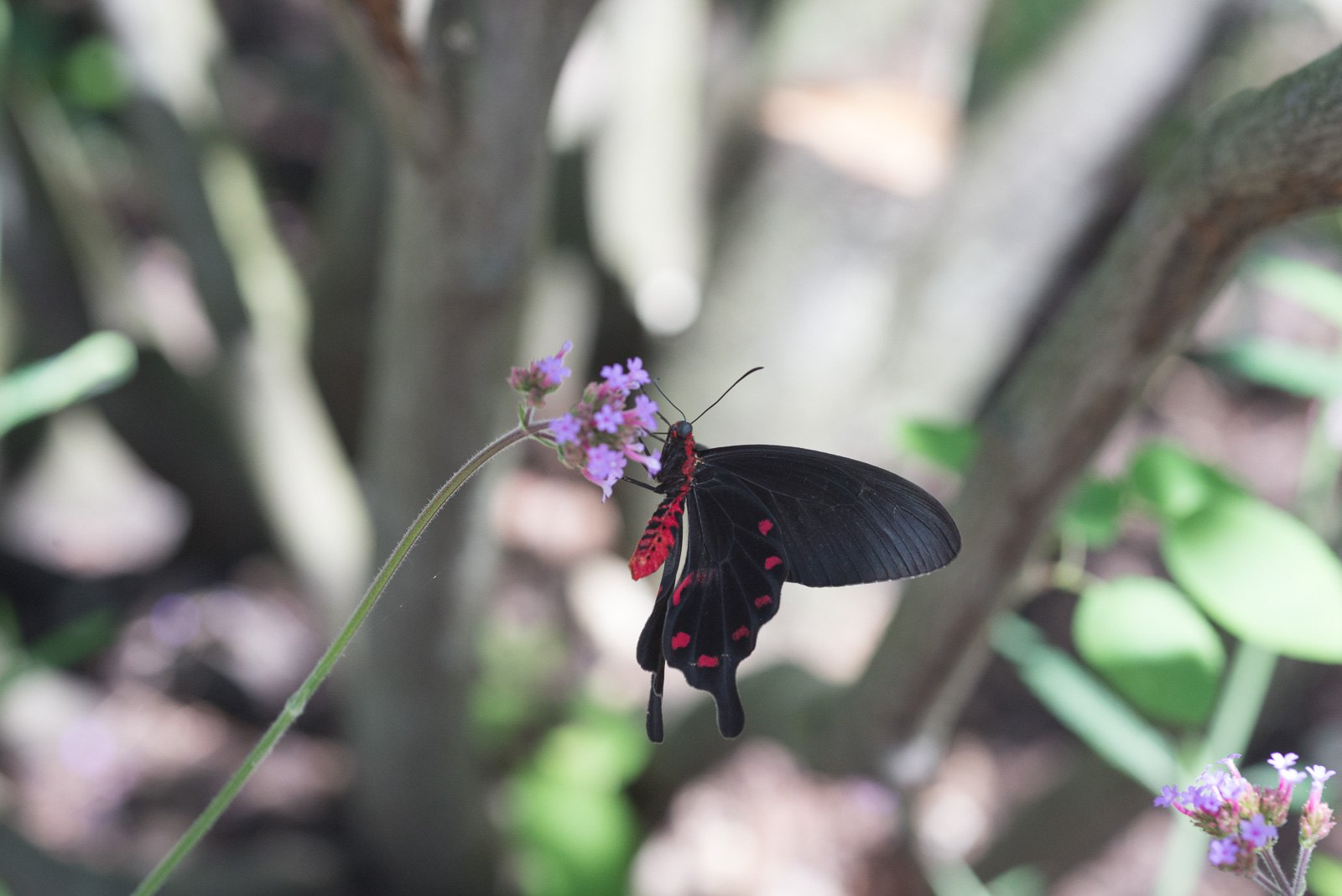 06-17-16 Chicago Botanic Garden-218.jpg