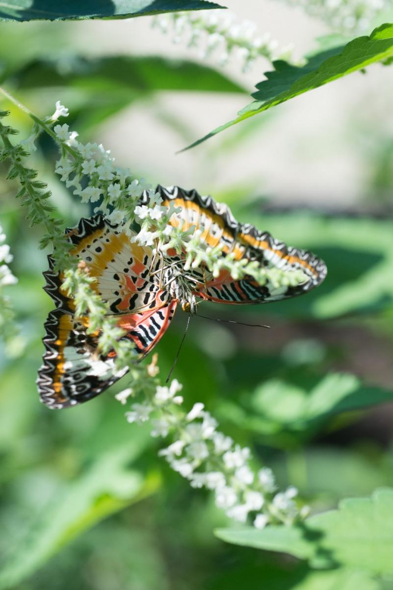 06-17-16 Chicago Botanic Garden-228.jpg
