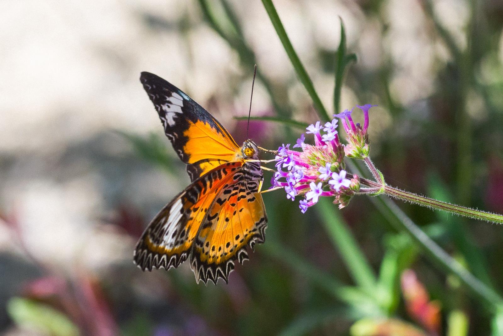 06-17-16 Chicago Botanic Garden-261.jpg