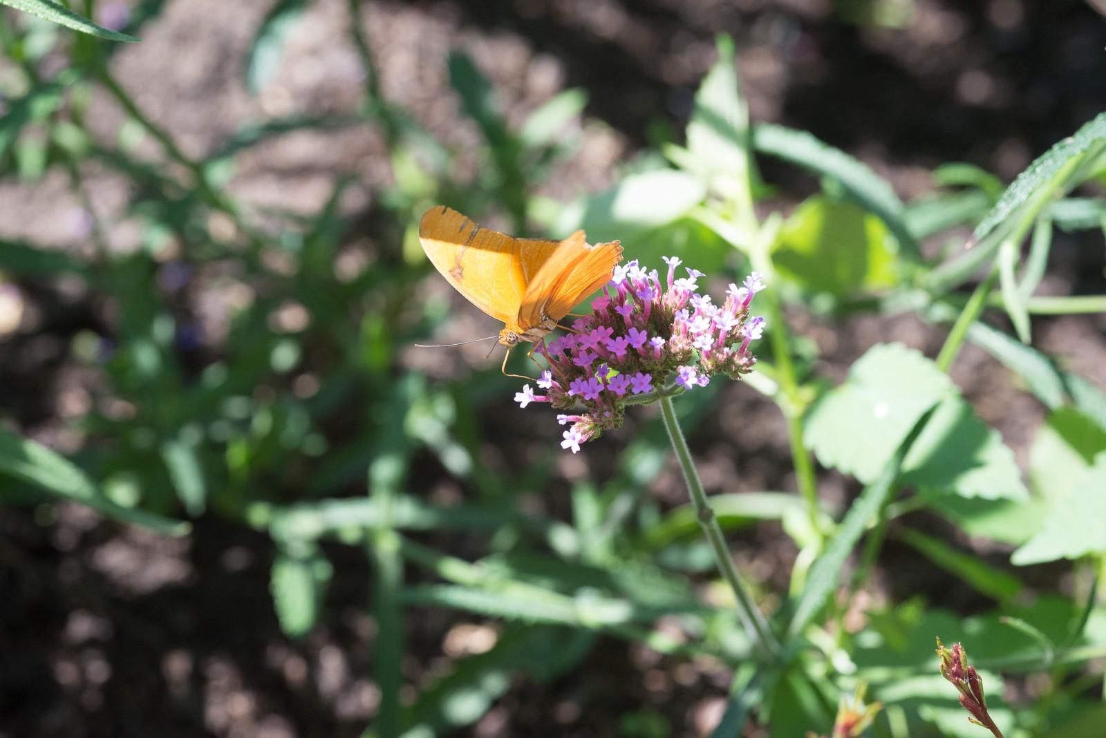 06-17-16 Chicago Botanic Garden-275.jpg
