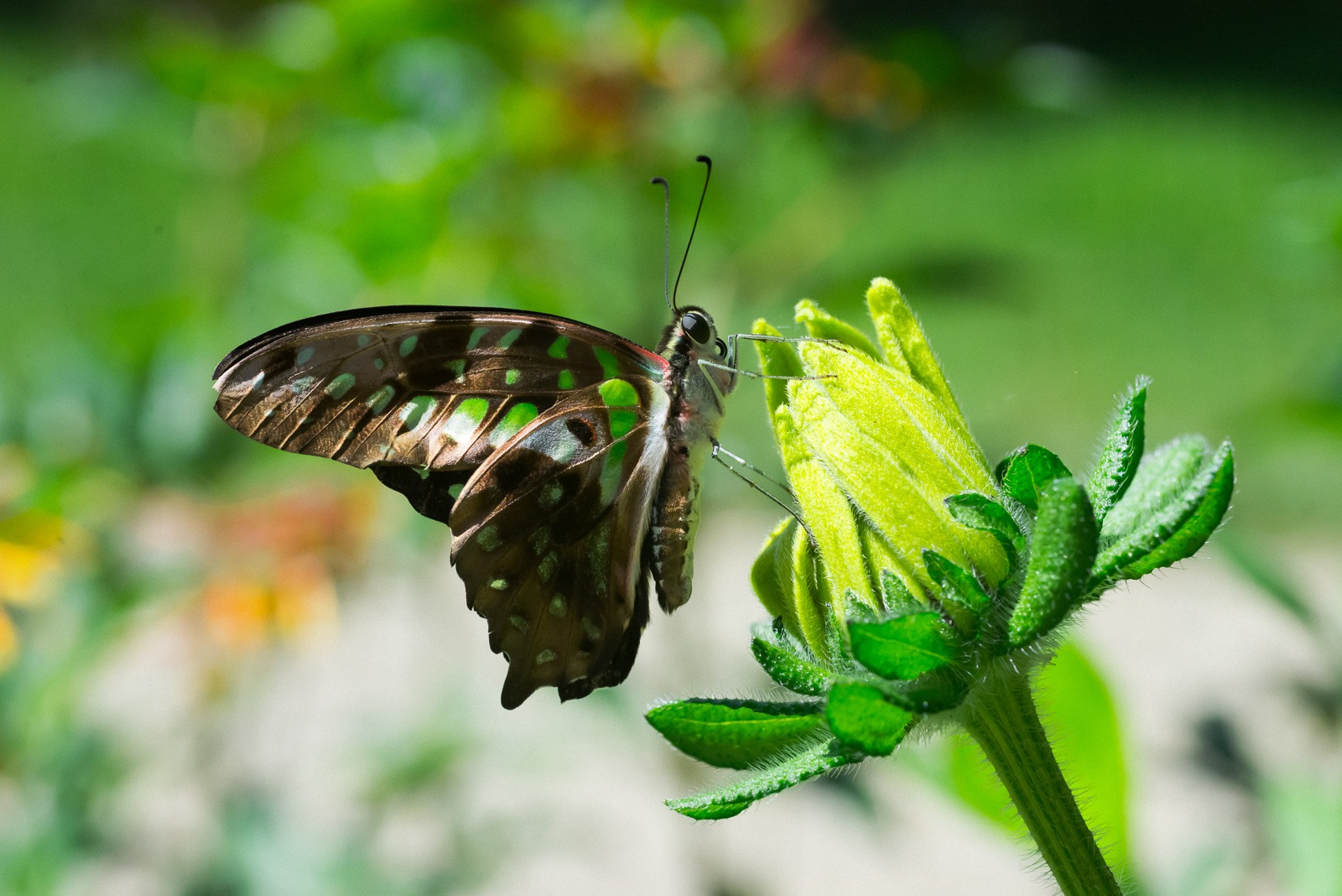 06-17-16 Chicago Botanic Garden-278.jpg