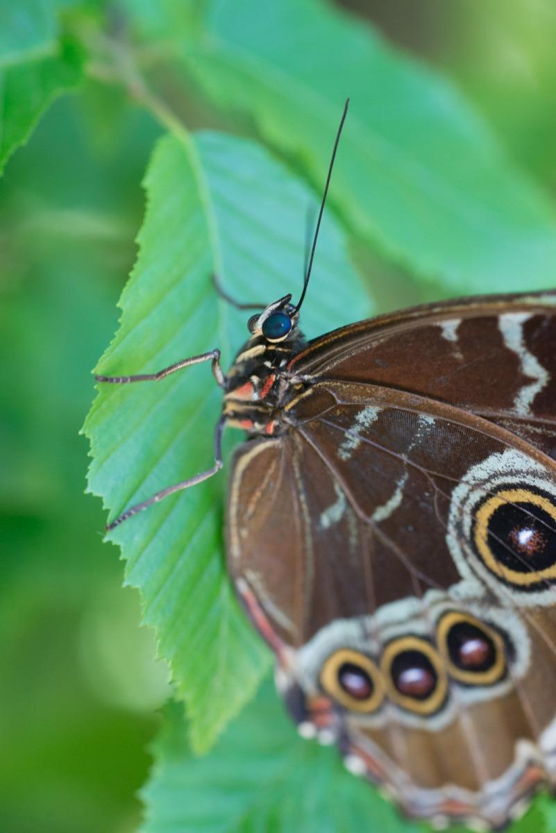 06-17-16 Chicago Botanic Garden-287.jpg