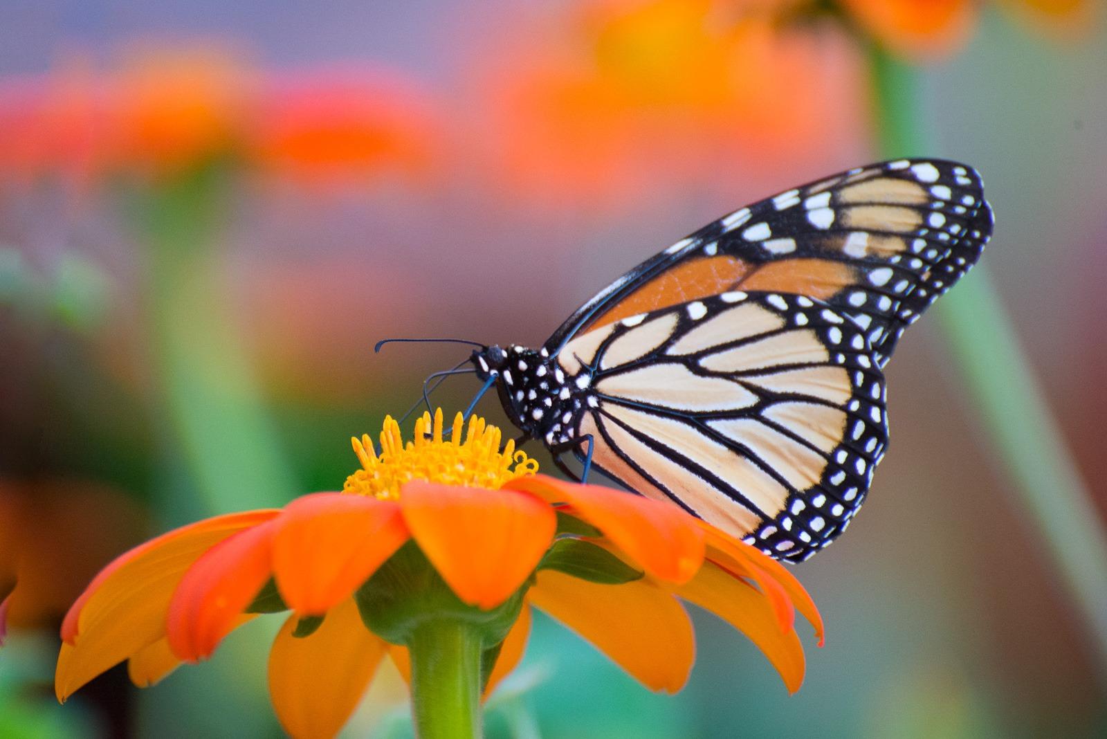 09-07-16 Chicago Botanic Garden-230.jpg