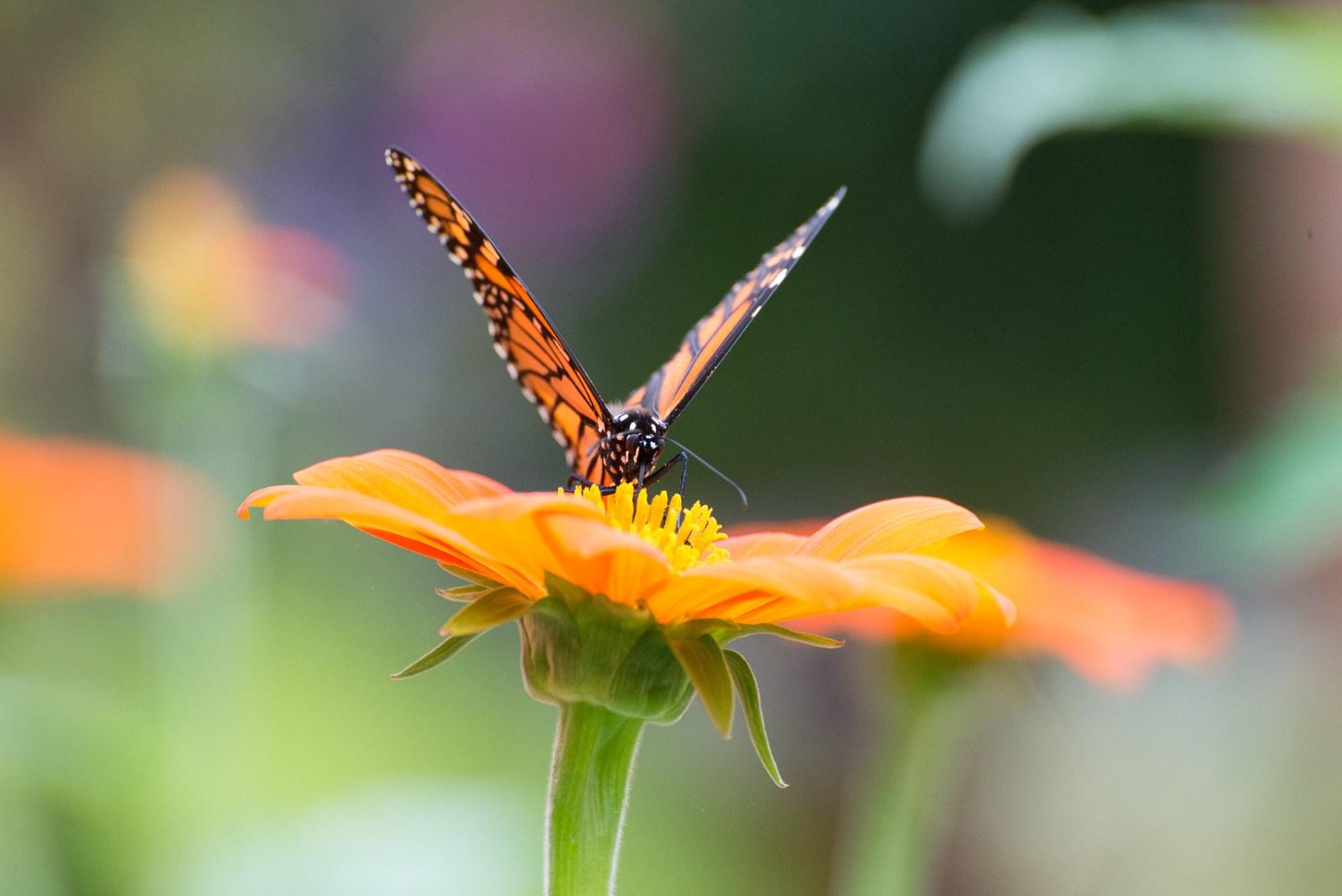 09-08-16 Chicago Botanic Garden-196.jpg