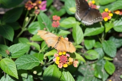 06-17-16 Chicago Botanic Garden-247.jpg