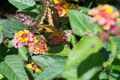 06-17-16 Chicago Botanic Garden-250.jpg