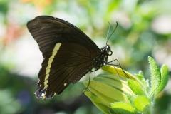 06-17-16 Chicago Botanic Garden-252.jpg