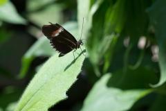 06-17-16 Chicago Botanic Garden-256.jpg