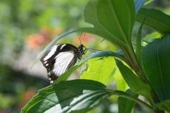 06-17-16 Chicago Botanic Garden-257.jpg