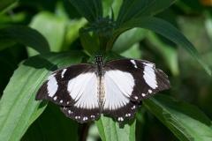 06-17-16 Chicago Botanic Garden-259.jpg