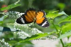 06-17-16 Chicago Botanic Garden-265.jpg