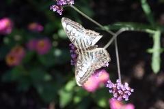 06-17-16 Chicago Botanic Garden-270.jpg