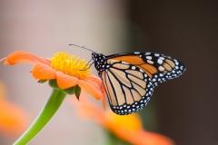 09-08-16 Chicago Botanic Garden-141.jpg