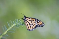 09-08-16 Chicago Botanic Garden-80.jpg