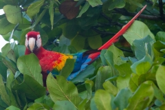 07-31-19 Out of Costa Rica day 4-44.jpg