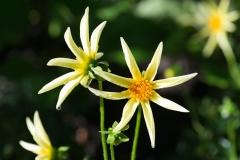 06-17-16 Chicago Botanic Garden-67.jpg